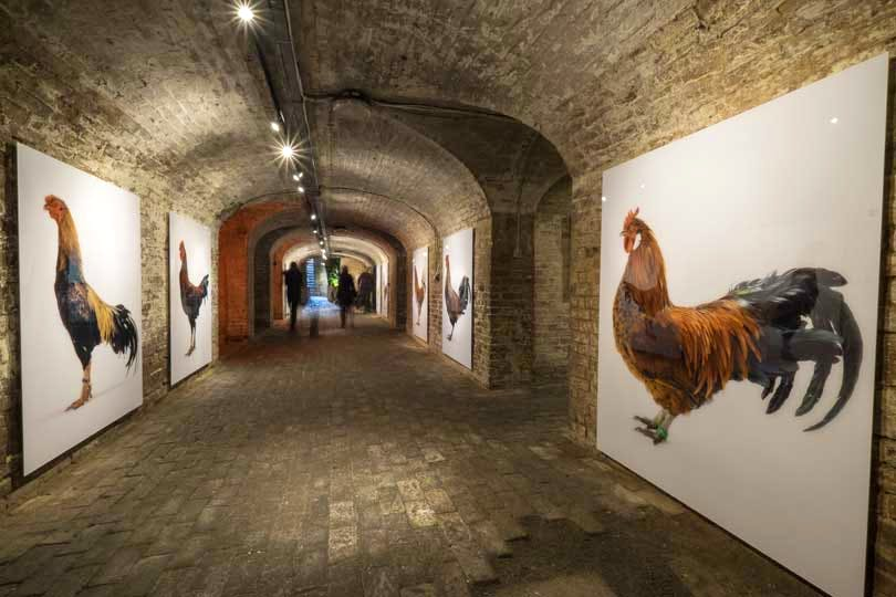 'Darwin's Dream' at The Crypt Gallery, St Pancras Church (installation view)