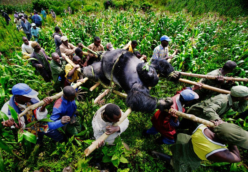 (July 2007, Bukima, Democratic Republic of Congo), from the series 'A violation of Eden', Brent Stirton.