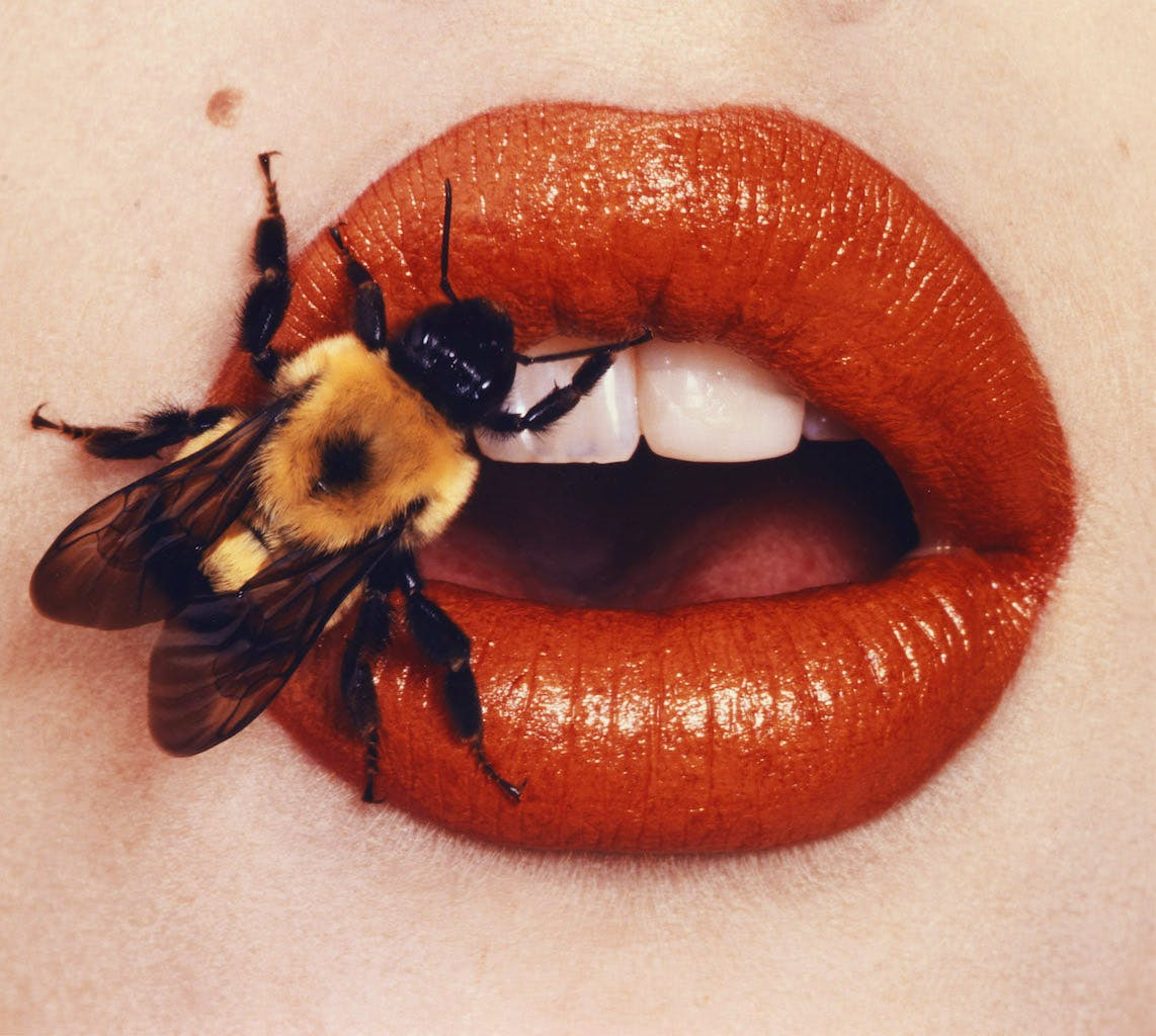 Bee (1995), Irving Penn.