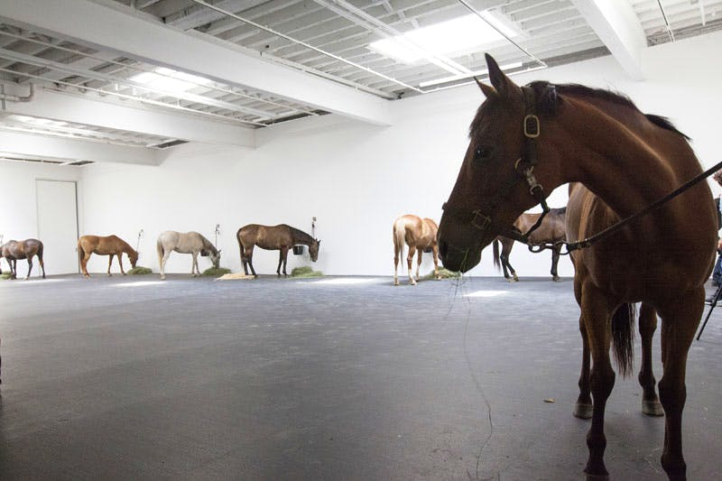 Installation view at Gavin Brown's Enterprise, New York, 2015, of Untitled (12 horses), first shown in 1969 and featuring 12 live horses