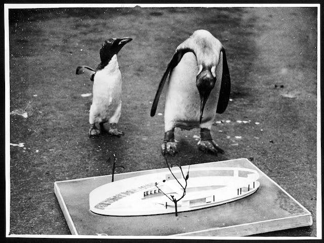 A 1928 model of the Penguin Pool at London Zoo, designed by Berthold Lubetkin and constructed in 1934