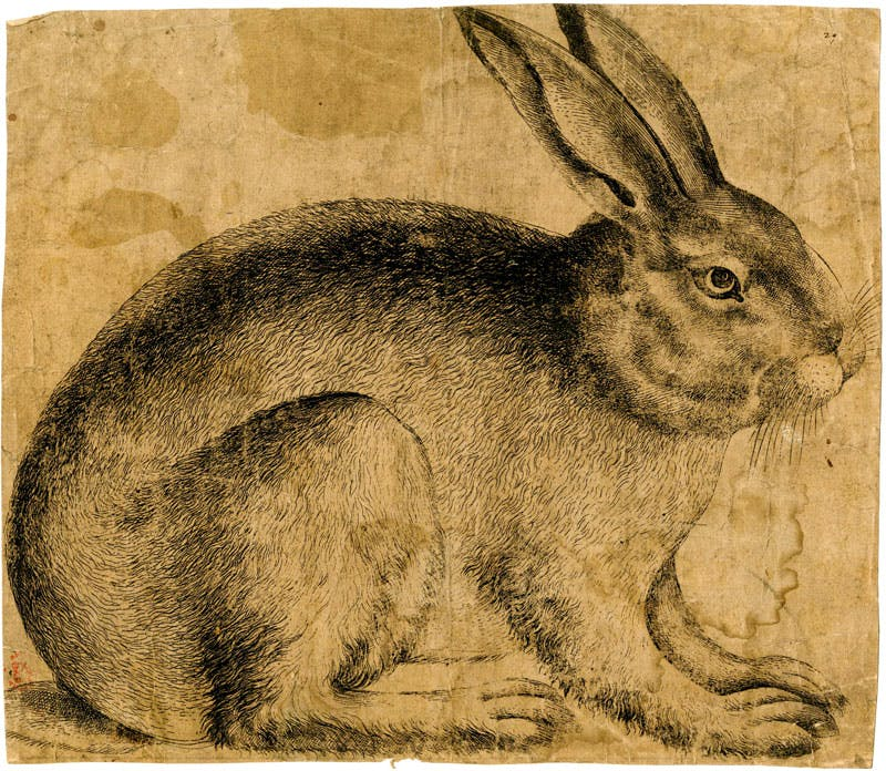 A Rabbit seen in profile (c. 1560–90), artist unknown, Netherlandish. British Museum, London; Courtesy The Trustees of the British Museum