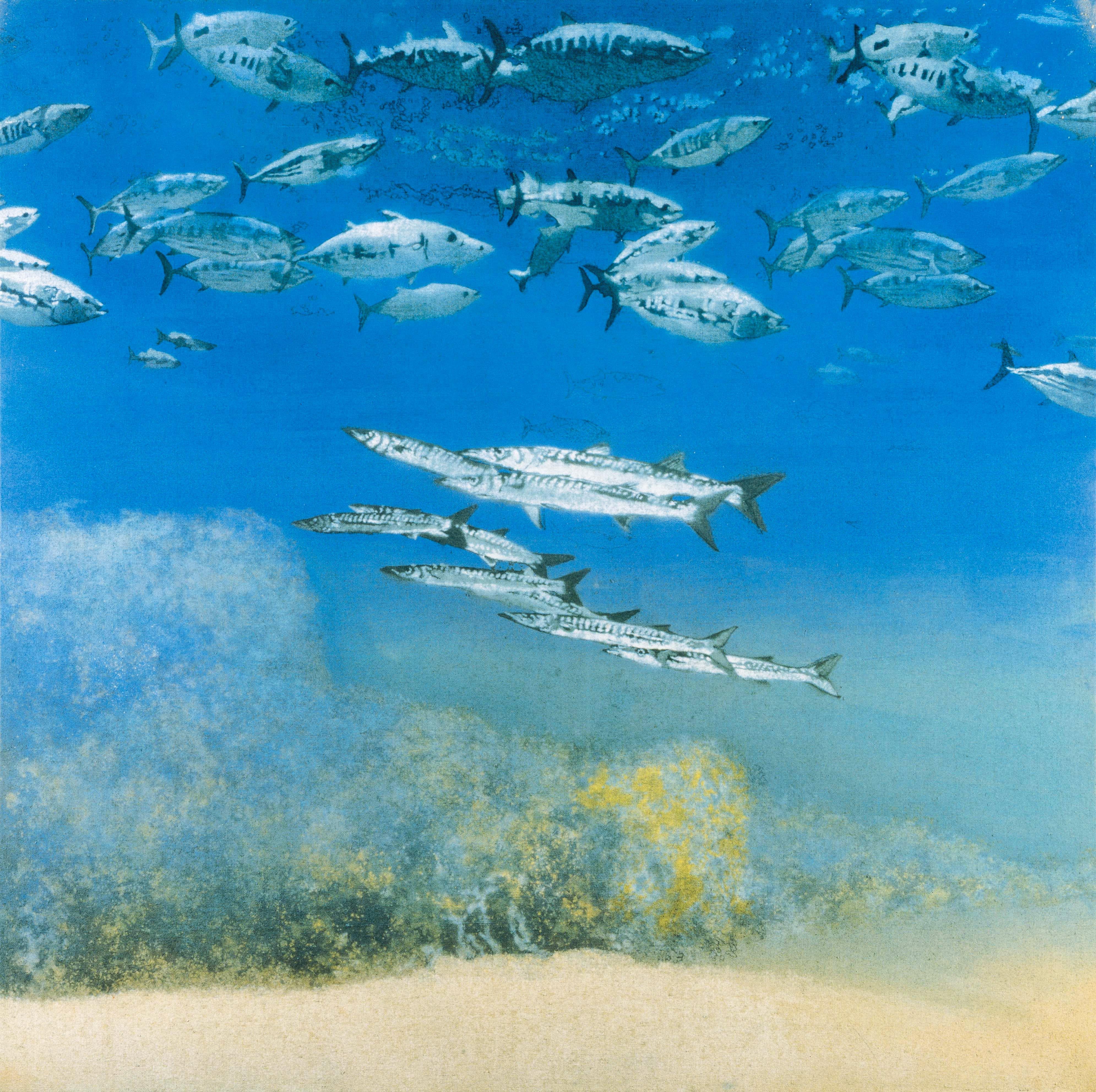 School IV: Barracuda under Skipjack Tuna (1978), Michael Andrews