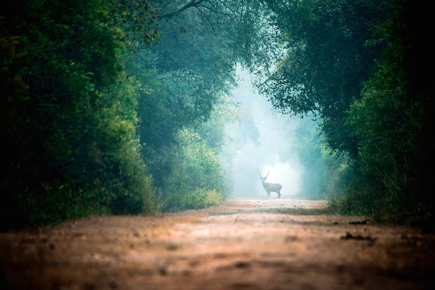 Sabr Dri Photography, The Deer on the Road, 2016. Photograph. Courtesy the artist, YSP and ArtRole