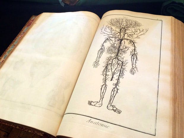 A page in the anatomy section of the Encyclopédie, edited by Denis Diderot. From the BBC's 'The Art of France'. Photo: Tim Kirby. © BBC