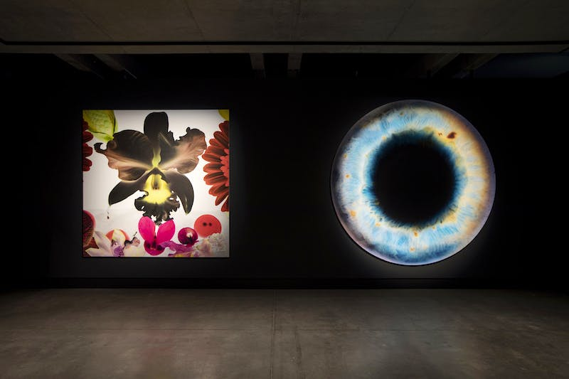 <em>In the Night Garden: Hale-Bopp</em> (2012) (left) and <em>We Share Our Chemistry with the Stars (AJ 280R) DIL2214</em> (2009) (right), Marc Quinn, installation view, Mona. Photo: Mona/Rémi Chauvin