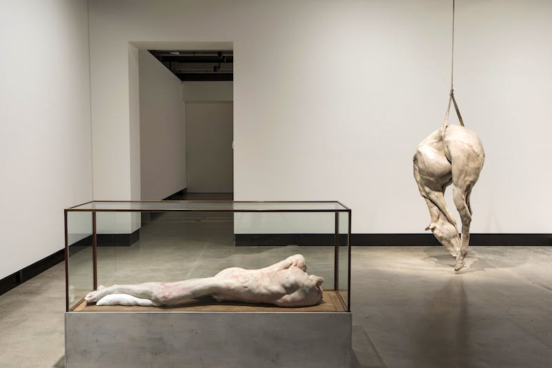 'Lange eenzame man' (2010) (left) and P XIII (2008) (right), Berlinde De Bruyckere, installation view, Mona. Photo: Mona/Rémi Chauvin