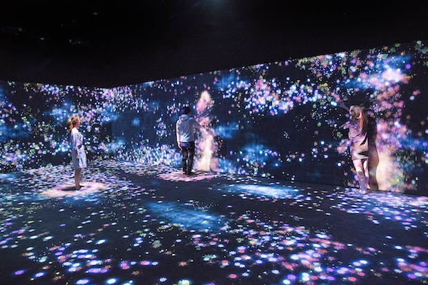 Flowers and People, Cannot be Controlled but Live Together – A Whole Year per Hour (2015), teamLab. Image courtesy Moody Center for the Arts