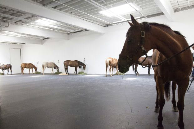Installation view at Gavin Brown's Enterprise, New York, 2015, of Untitled (12 horses), first shown in 1969 and featuring 12 live horses. Courtesy Gavin Brown's Enterprise, New York/Rome and Cheim & Reid; photo: Brian Buckley; © Jannis Kounellis