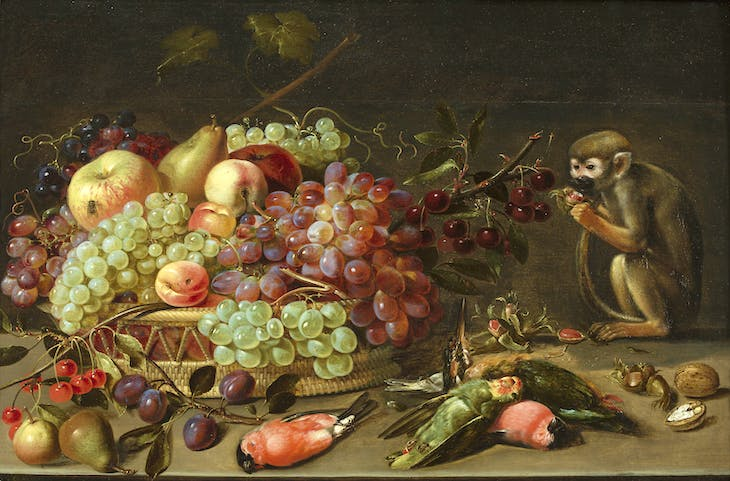 Still Life with Fruit, Dead Birds, and a Monkey (date unknown), Clara Peeters