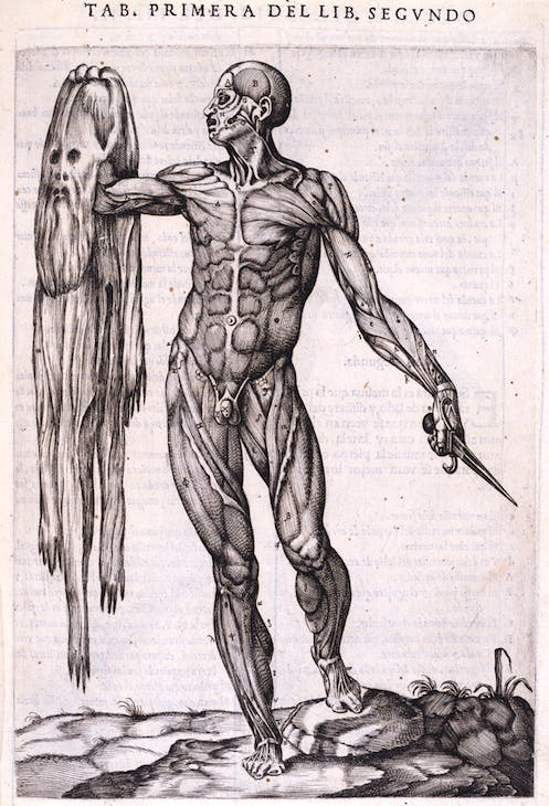 A flayed man holding his own skin, from Juan de Valverde de Amusco's Historia de la composicion del cuerpo human (1556), 1556, Gaspar Becerra. Royal Academy of Arts, London