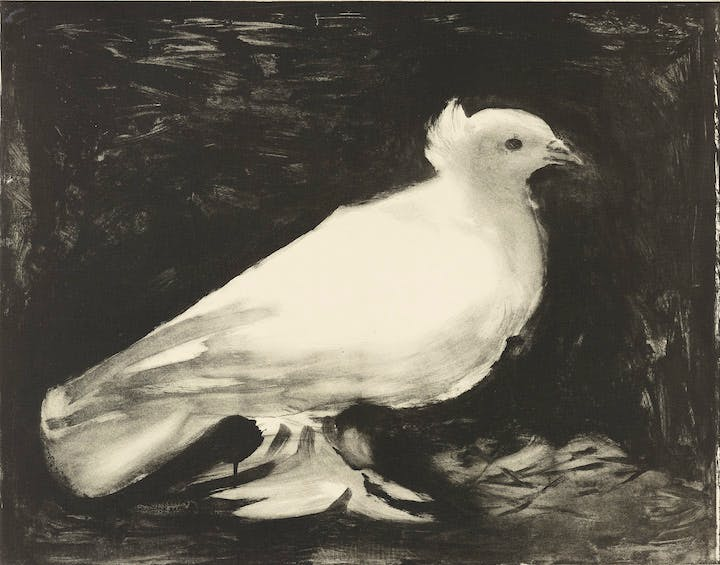 The Dove (1949), Pablo Picasso. © 2017 Estate of Pablo Picasso / Artists Rights Society (ARS), New York