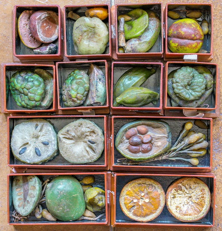 Collection of boxed wax fruits from the Belgian Congo