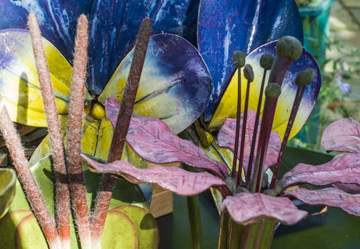 Botanical models from 'Object Lessons' at Manchester Museum