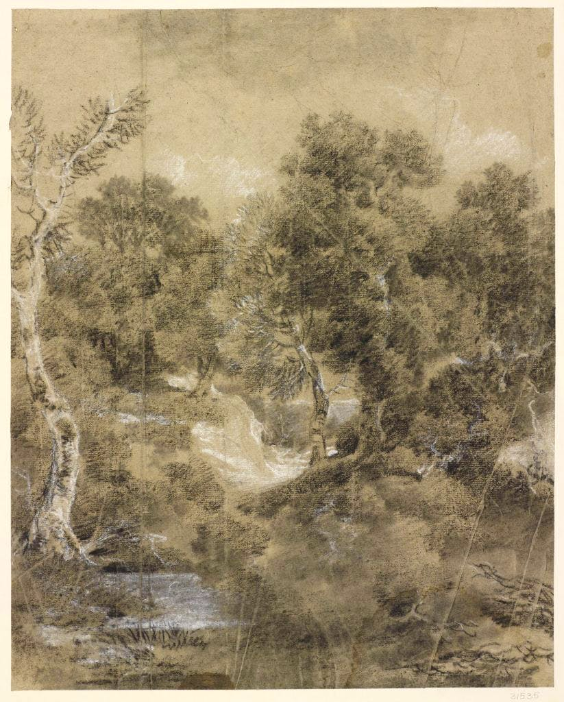 Wooded Landscape with Tree and Silver Birch in Foreground, (c. 1745–55), Thomas Gainsborough, Royal Collection Trust/© Her Majesty Queen Elizabeth II 2017