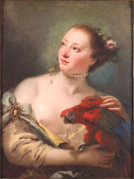 Young Woman with a Macaw (1760), Giovanni Battista Tiepolo. Ashmolean Museum, Oxford