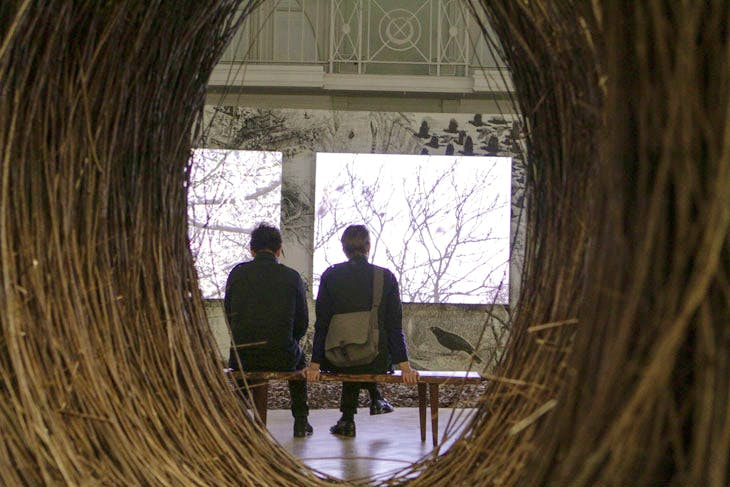 Visitors watching A Natural History of Nest Building (2017), seen through Untitled (Bower) (2017).