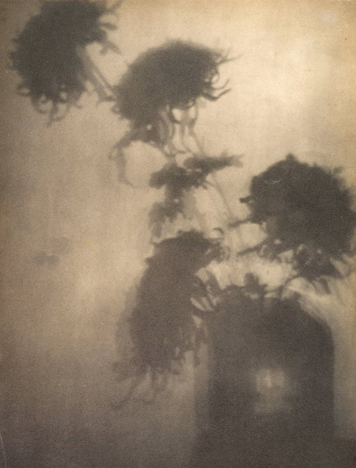 "The Shadows on the Wall. ""Crysanthemums"" (ca. 1906), Adolf de Meyer. Courtesy The Metropolitan Museum of Art"