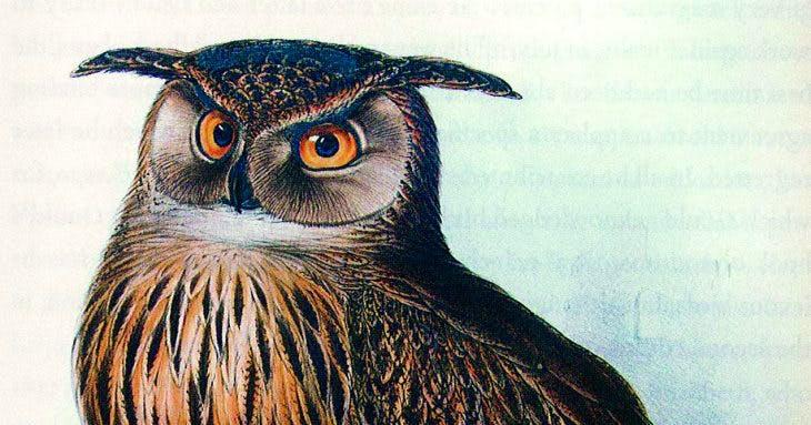 Eagle Owl, Edward Lear.