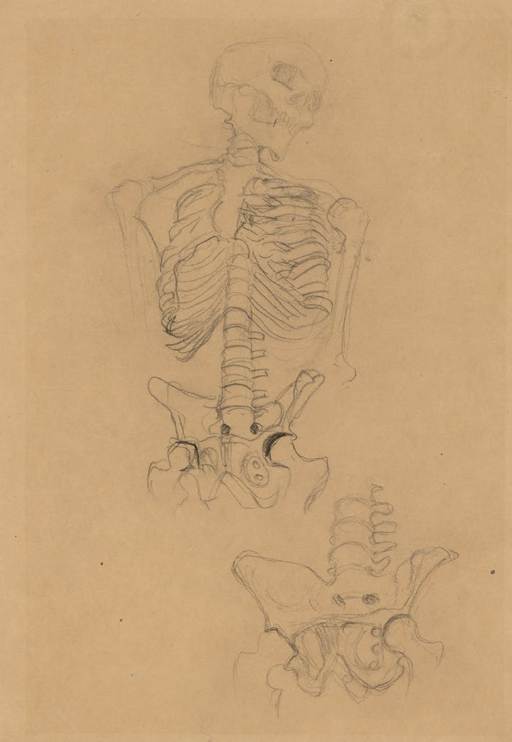 Two Studies of a Skeleton (Studies for the Transfer Sketch for Medicine) (about 1900), Gustav Klimt. Courtesy of Albertina, Vienna and Museum of Fine Arts, Boston