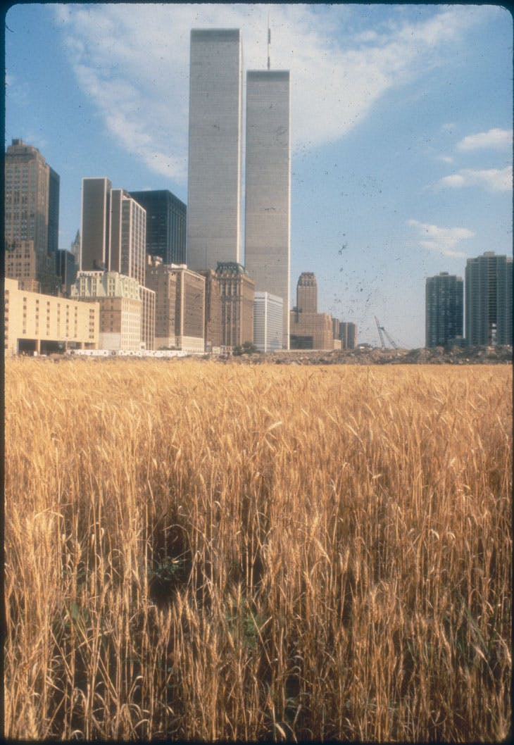 Wheatfields for Manhattan (1982), Agnes Denes. Battery Park Landfill.