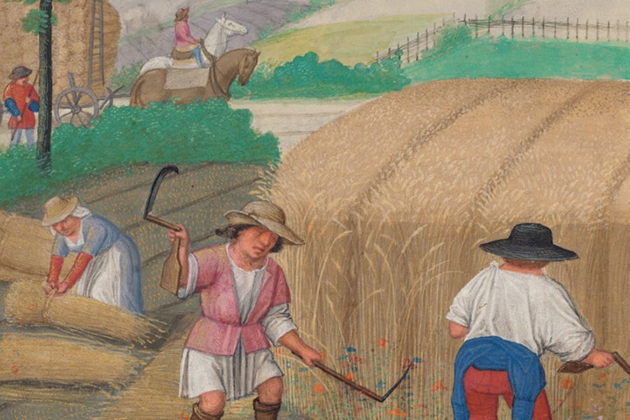 August: Reaping Wheat, 'Da Costa Hours' (detail; c, 1515), illuminated by Simon Bening. The Morgan Library & Museum, New York.