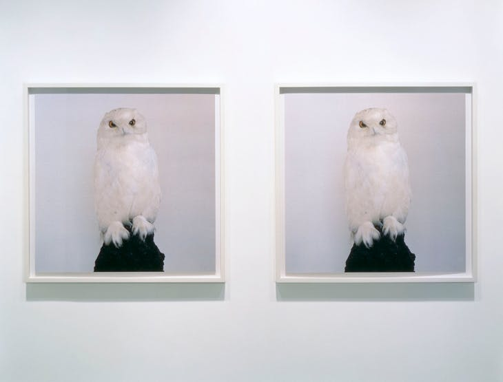 Dead Owl (1997), Roni Horn. Hauser & Wirth Collection, Switzerland