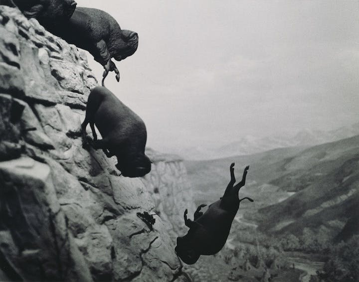 Untitled (Falling Buffalo) (1988-89), David Wojnarowicz. Image courtesy of The Estate of David Wojnarowicz and P.P.O.W., New York