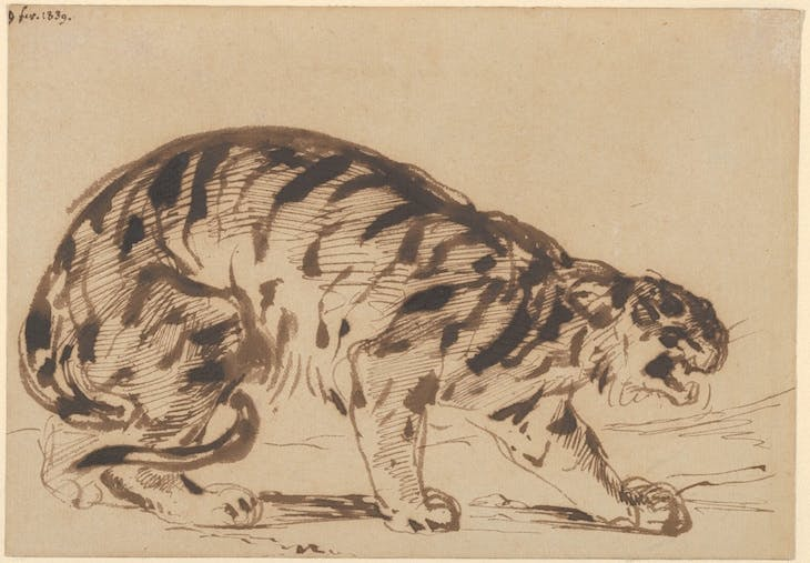 Crouching Tiger, Delacroix