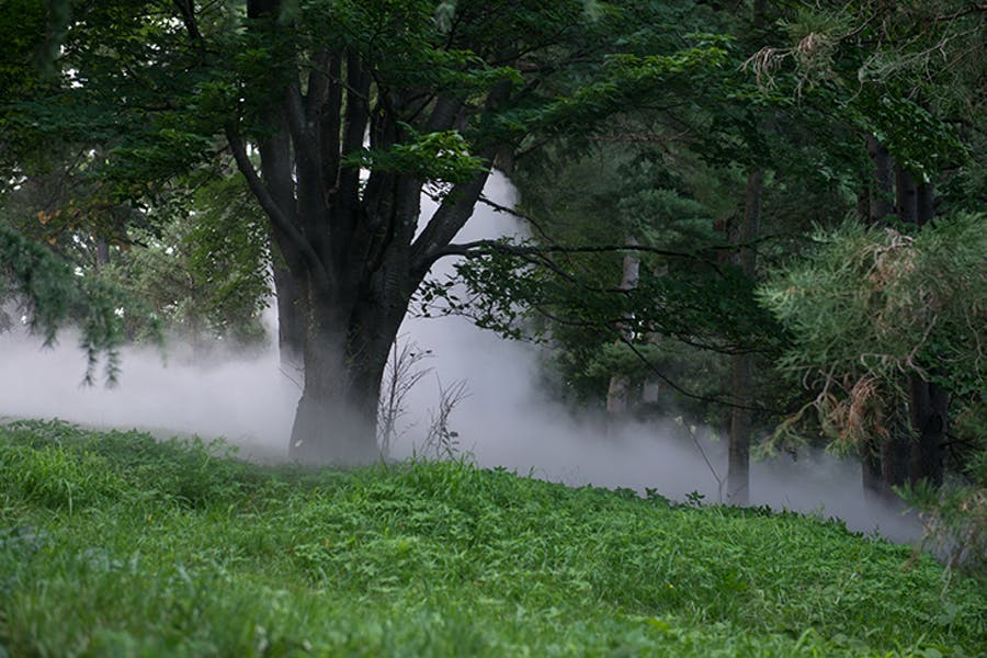 Fog x Hill (2018), Fujiko Nakaya. Installation view at the Arnold Arboretum, Boston.