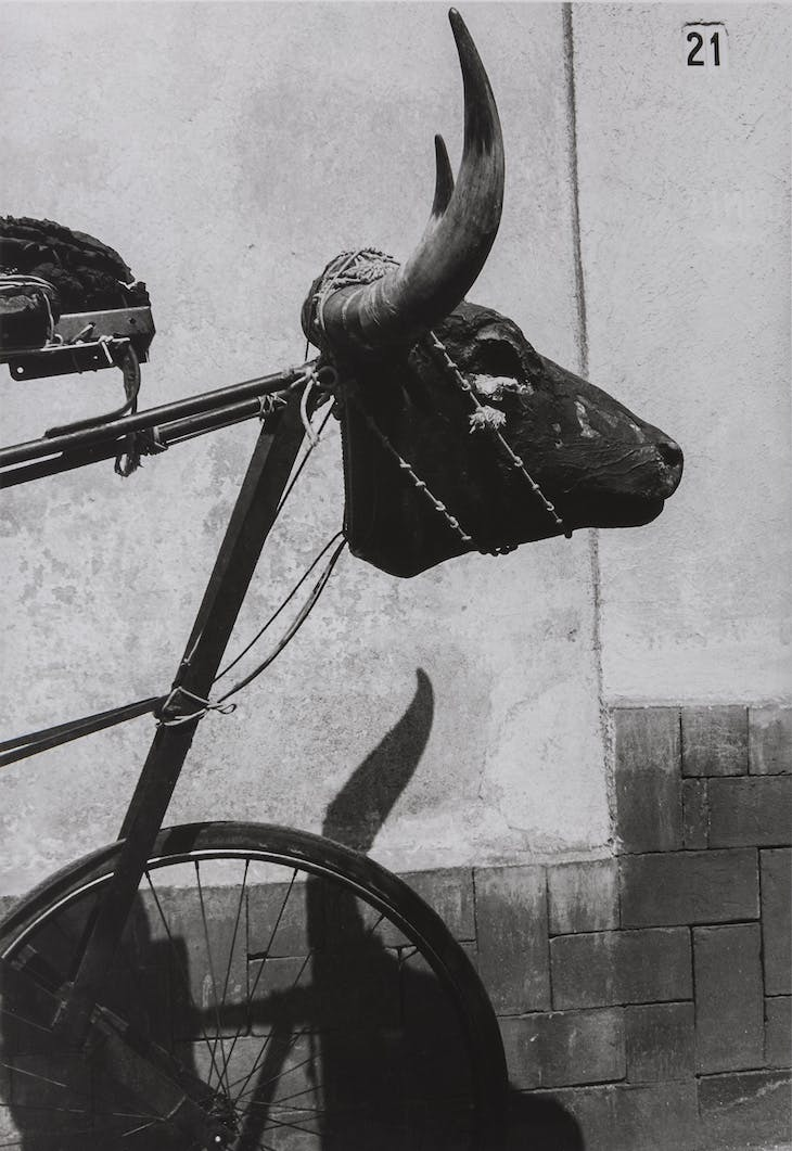 Little Bull, Coyoacán, Mexico City (1982), Graciela Iturbide
