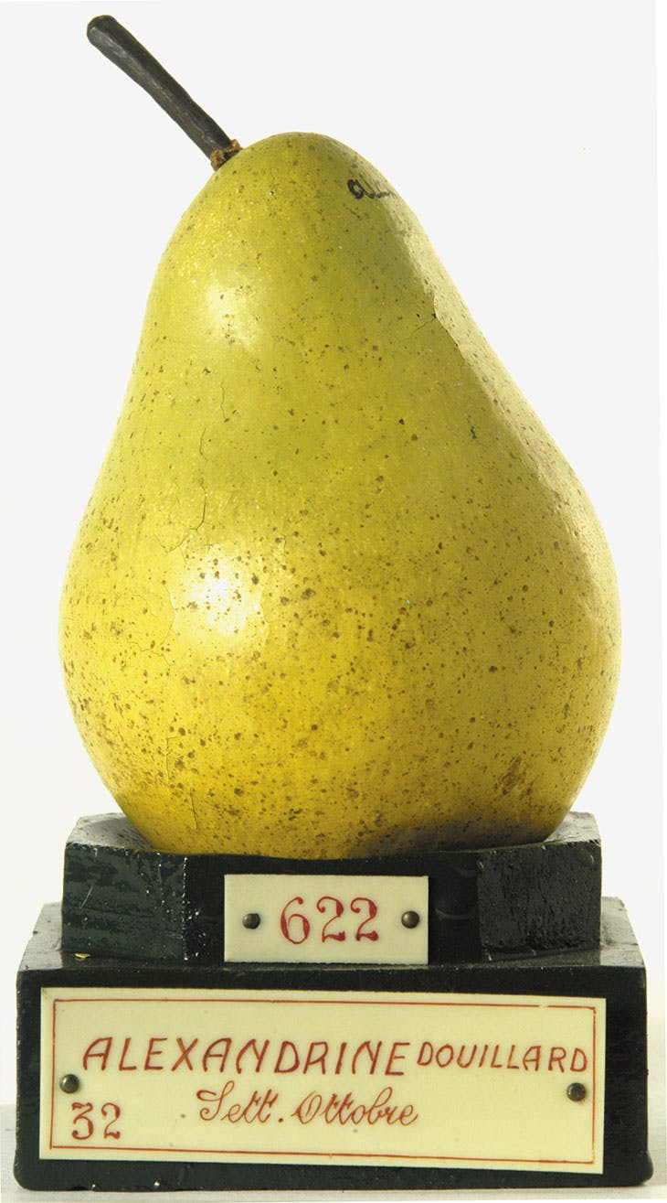 Model of an 'Alexandrine Douillard' pear, Francesco Garnier Valletti. Museo