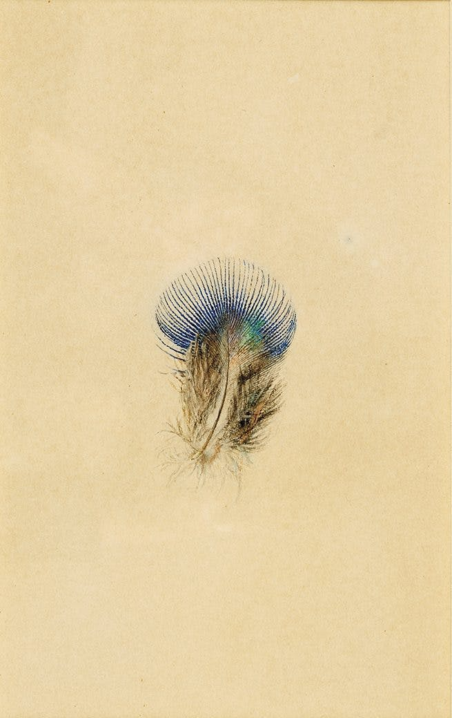 Study of a Peacock's Breast Feather (1873), John Ruskin.