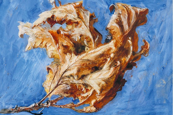 Study of Spray of Dead Oak Leaves (detail; 1879), John Ruskin.