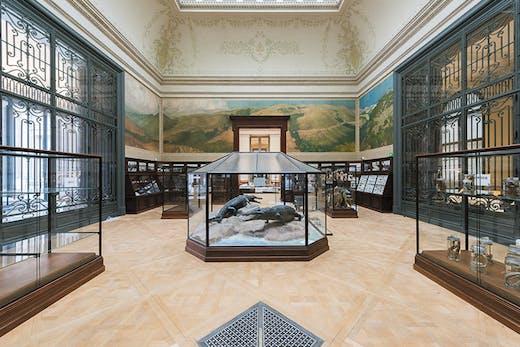 The Crocodile Room in the Africa Museum, Tervuren.