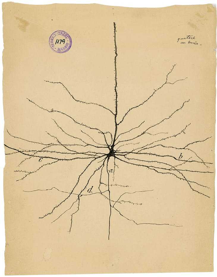 The Pyramidal Neuron of the Cerebral Cortex (1904), Santiago Ramón y Cajal.