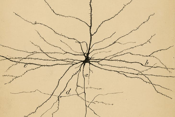 The Pyramidal Neuron of the Cerebral Cortex (1904), Santiago Ramón y Cajal. Cajal Institute (CSIC), Madrid.