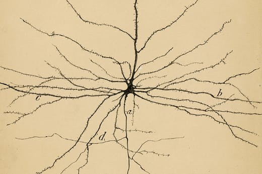 The Pyramidal Neuron of the Cerebral Cortex (1904), Santiago Ramón y Cajal. Cajal Institute (CSIC), Madrid.