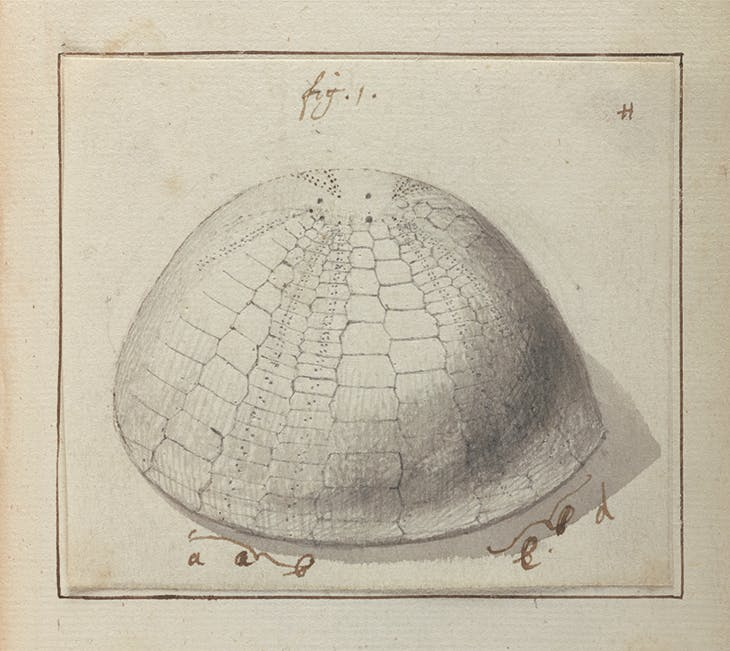 Lister's notes indicating needed corrections to his daughters' drawings of sea urchins. From 'Original Drawings for Lister's Conchology ca. 1690'.
