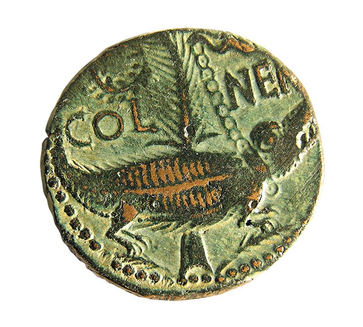 'As de Nîmes' dupondius coin, verso showing a crocodile chained to a palm branch, issued under the reign of Augustus (27BC–14AD). Musée de la Romanité, Nîmes