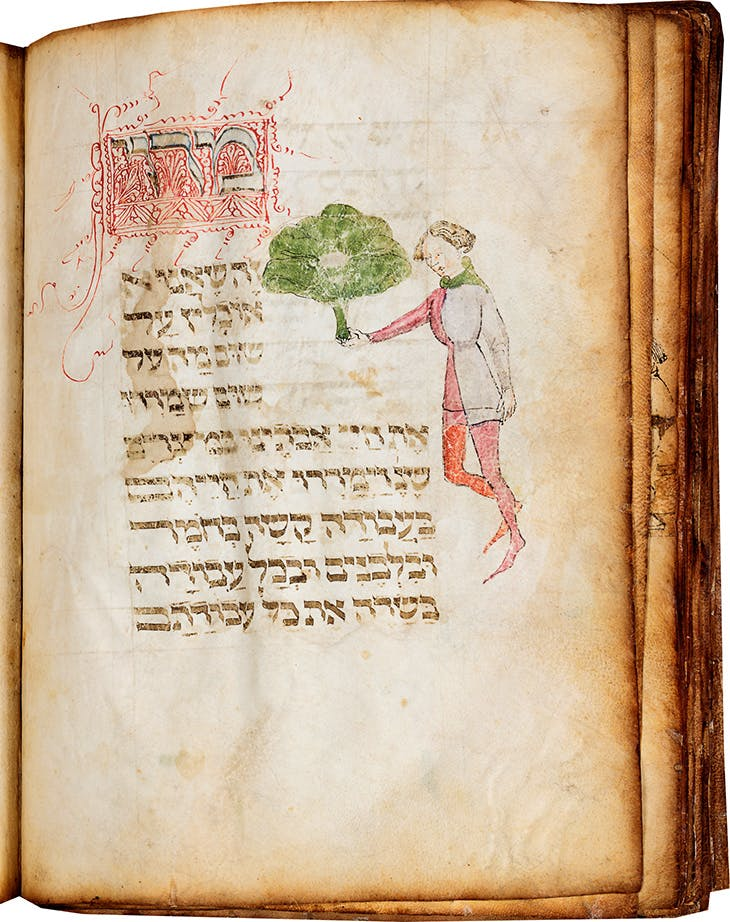 Page showing a man holding a large bunch of maror (bitter herbs), illustrating the text 'This maror' in the Lombard Haggadah (c. 1390–1400), circle of Giovannino de Grassi (Master of the Paris Tacuinum?), Milan