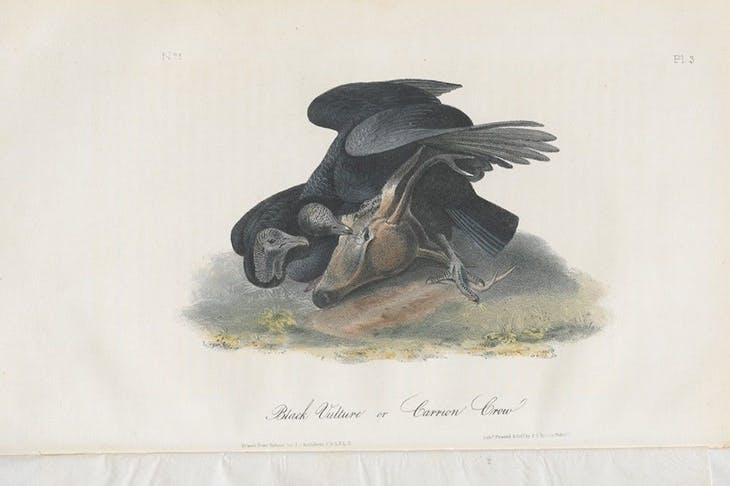The Birds of America, from drawings made in the United States and their territories (1840–44), John James Audubon.