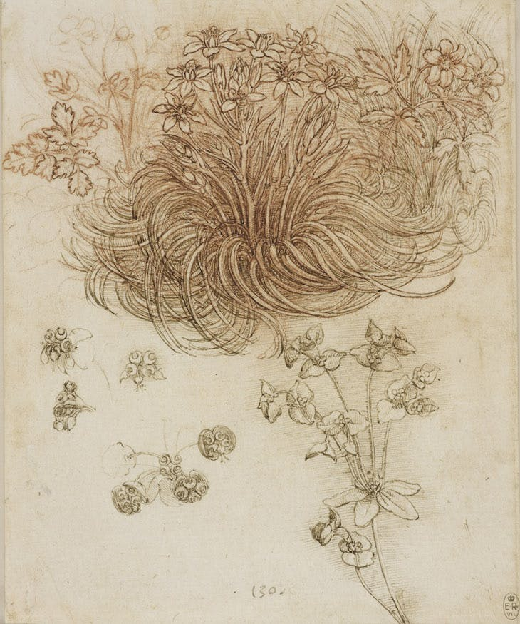 A Star-of-Bethlehem and other plants (c. 1506–12), Leonardo da Vinci.