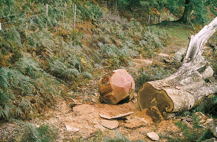 Wooden Boulder (1978–ongoing), David Nash, in 1978.