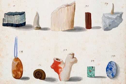 Lapidary and 'figured' stones, corals, fossils, semi-precious stones and minerals (c. 1630–40), Vincenzo Leonardi