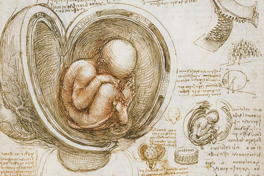 The fetus in the womb (detail; c. 1511), Leonardo da Vinci.