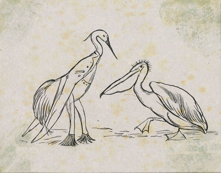 Lear's proof illustration for 'The Pelican Chorus', in Laughable Lyrics (1877).