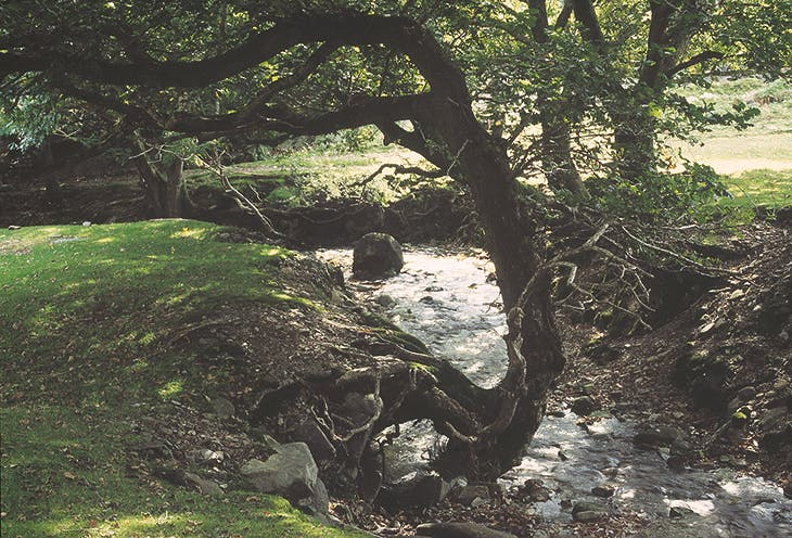 Wooden Boulder in Bronturnor stream, 1990.