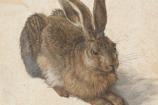 Young Hare (detail; 1502), Albrecht Dürer. Image: © The Albertina Museum, Vienna
