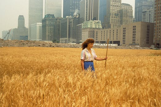Agnes Denes walking through her installation Wheatfield – A Confrontation (1982) in the Battery Park landfill, New York.